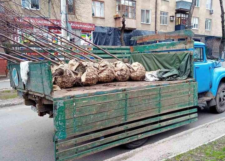 На ул. Б. Хмельницкого в Краматорске высаживают рябины (фотофакт)