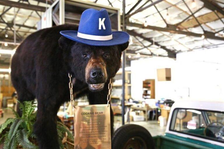В США снимут фильм о медведе, который съел 40 кг кокаина
