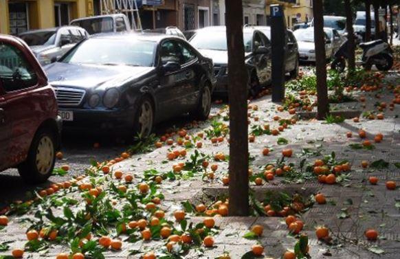 В Севилье из апельсинов будут производить чистую энергию
