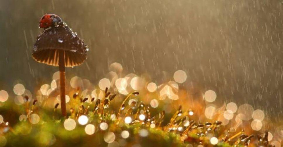 В Мариуполе дождливая погода сменится солнечной. Новости Мариуполя и Донбасса |