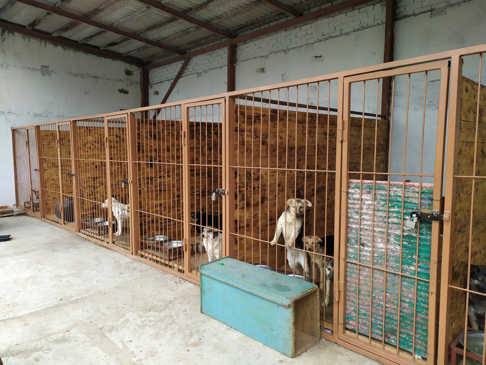 У Вараші відкрився центр для безпритульних тварин — Новини Волині