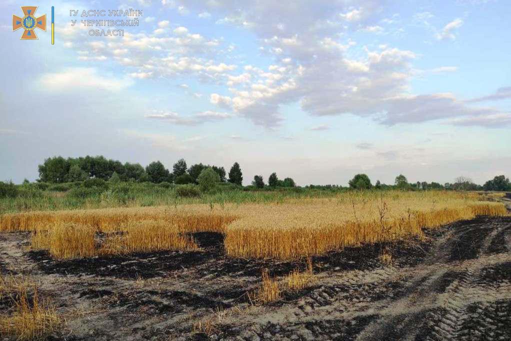 У Ніжинському районі ліквідовано пожежу пшеничного поля — Новини Чернігова та області
