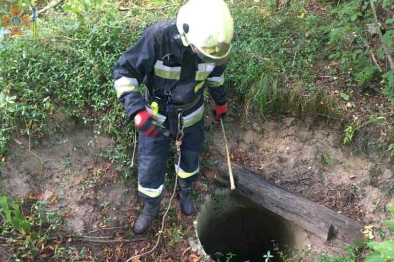 Чернігівська область: рятувальники витягли собаку, яка впала у  колодязь – Новини Чернігова та області