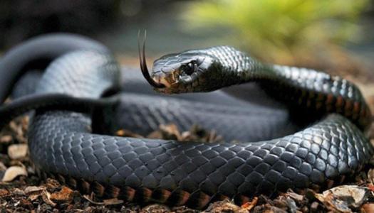 У Львівській області двоє дітей потрапили до лікарні через укус змії » – Новости мира