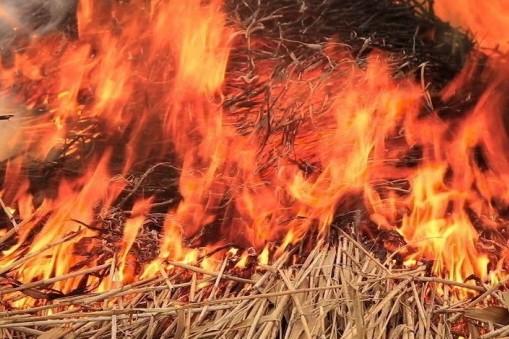 У селі Бене пожежа знищила 0,5 га сухої трави та чагарників