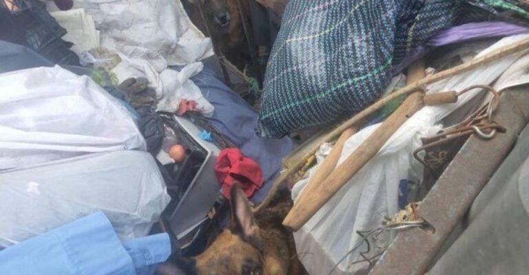 В Мариуполе в частном доме в антисанитарных условиях умирают животные. Новости Мариуполя и Донбасса |