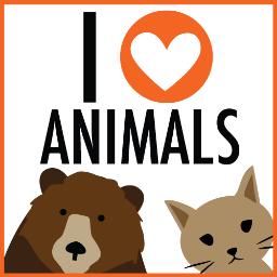 С любовью и заботой о ваших животных: пятёрка качественных и популярных товаров и услуг в Краматорске